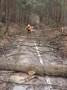 Sečnja in spravilo lesa