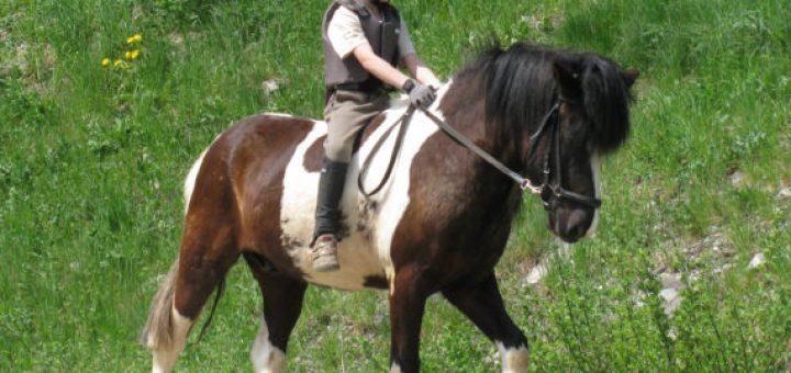 Jahanje konjev cenik