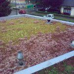 zelena streha rastline