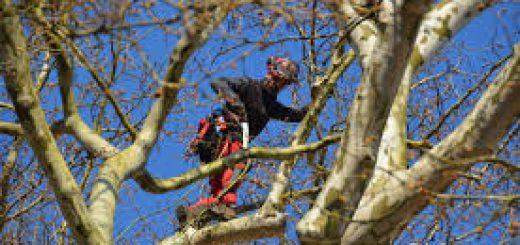 Podiranje dreves in nega