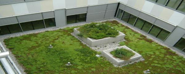 Rastline na zeleni strehi