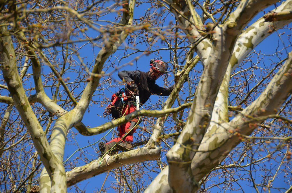 Sajenje dreves