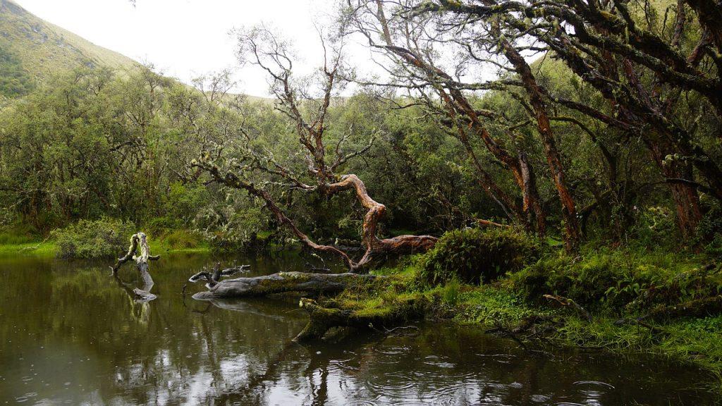 Sprehod po tropskem gozdu