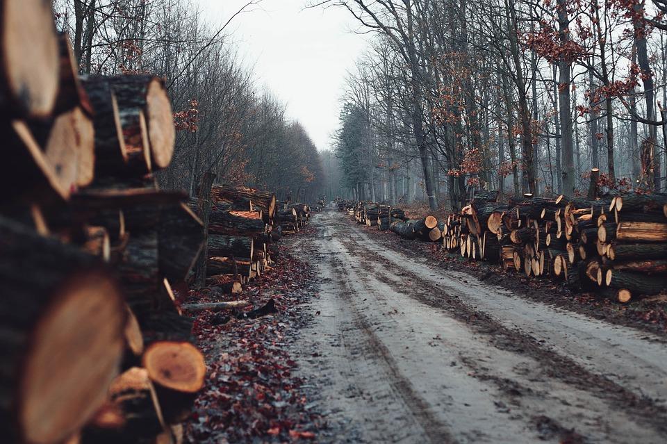 gozdarstvo