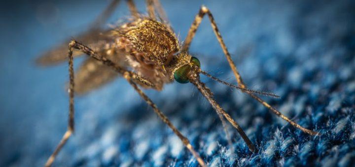 Zaščita pred komarji