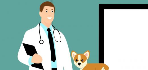 veterinar